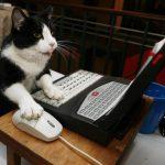 オフィスでも猫に囲まれたい!便利でカワイイ、デスクを飾る猫グッズ