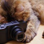 猫好き必見!猫をさらに可愛く撮るための3つのポイント