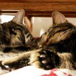 防災対策はペットにも必要!愛猫を守るためにしてあげられること