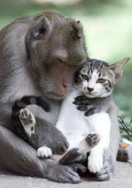 【にゃんこに萌えるのは人間だけじゃにゃい!】猫と仲良しの動物たち