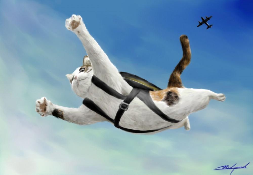 【小さな身体に秘めたもの】猫の驚くべき身体能力について