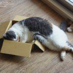 「なぜそこまでして?」箱に入りたくてしょうがない猫特集♪