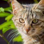 どうして、猫は、夜になったら目が輝くの?