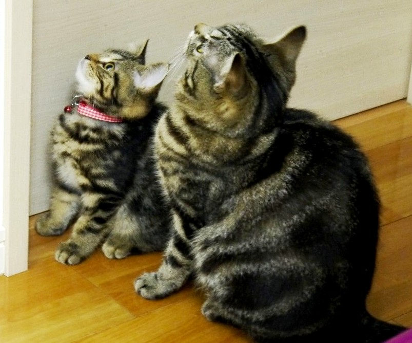 シンクロ率100%の息ぴったりシンクロ猫たちに萌♪