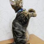 猫と一緒にヨガが出来る「ネコヨガ」で癒されよう