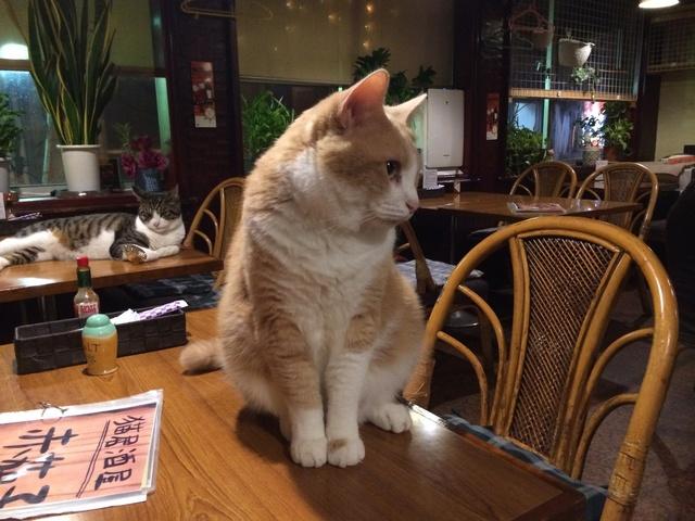 【お酒好き必見!】かわいい猫たちがいる居酒屋へ行ってみよう♪