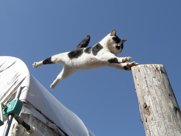 【行動範囲は三次元】猫の『スーパージャンプ!』『失敗ジャンプ!』どちらもイイものです!!
