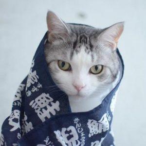 【手ぬぐい決定版】猫さんも大好き♪猫飼いさんはやっぱり猫柄で!