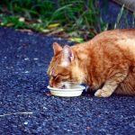 知っておこう! ネコちゃんが食べてはいけないもの