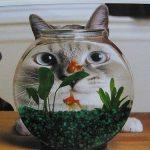 え!?猫は本当は魚嫌いなの!?猫餌の新事実