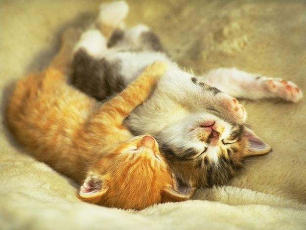 寂しがり屋さん?猫や人を「ぎゅっ」と抱きしめて眠る猫がたまらない