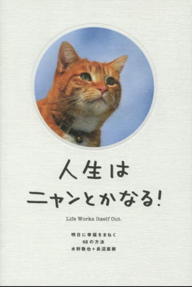 大人も子供も時間を忘れる!夢中になれる猫の本