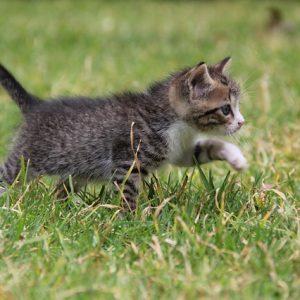 猫になって町並みを歩ける「キャットストリートビュー」がすごい