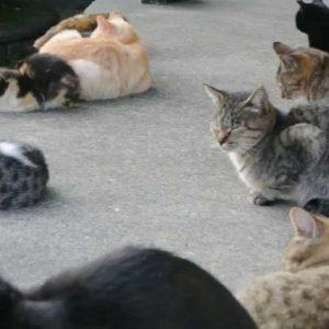 集まって何をしているの?『猫の集会』の不思議に迫ります