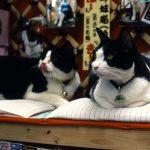 【よくきたニャ♪】猫カフェではないけど看板猫に会えるお店