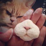 【パーツ萌え♪】やっぱり猫の「マズル」が大好き!