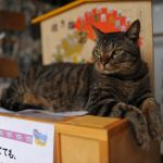 猫好きにはたまらない!猫寺「御誕生寺」のかわいい猫ちゃんたち♪