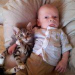 """""""萌え""""コラボ。猫と人間の赤ちゃんが遊ぶ画像が可愛すぎる!まとめ"""