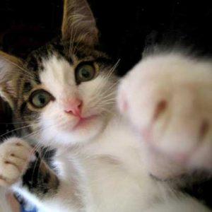 「遊び?」「不快感?」【魅惑の猫パンチ】猫パンチにも色々あるんです
