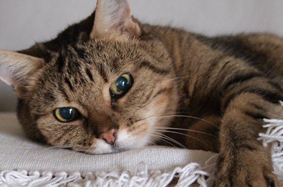 猫がいるけど旅行に行きたい!「ペットシッター」について調べてみました