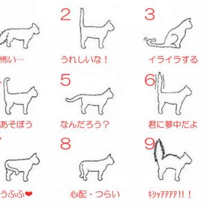 猫のしっぽを観察!しっぽでわかる猫の気持ち。