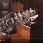 【爆笑】おやつの入った引き出しを、なんとかして開けようとする猫ちゃん
