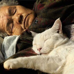 「ここまで仲良しになれるの?」おばあちゃんと猫の素敵なご関係