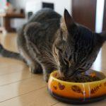 知らない人も多い事実。猫はご飯を噛まない動物だった?!