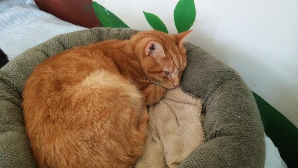 今から知っておきたい猫の病気と予防について