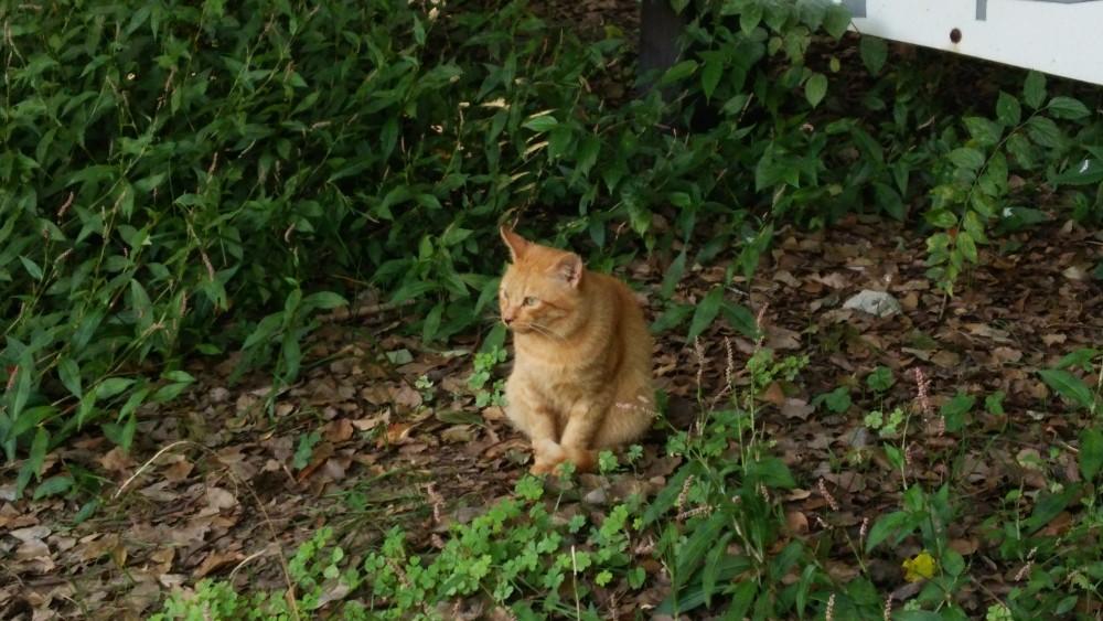 大阪府大阪市住之江区にある猫パラダイス:住之江公園