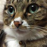 猫を飼う前に知っておきたい、猫に与えてはいけない食べ物