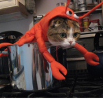 Lobster-Cat-Halloween-Costume_png