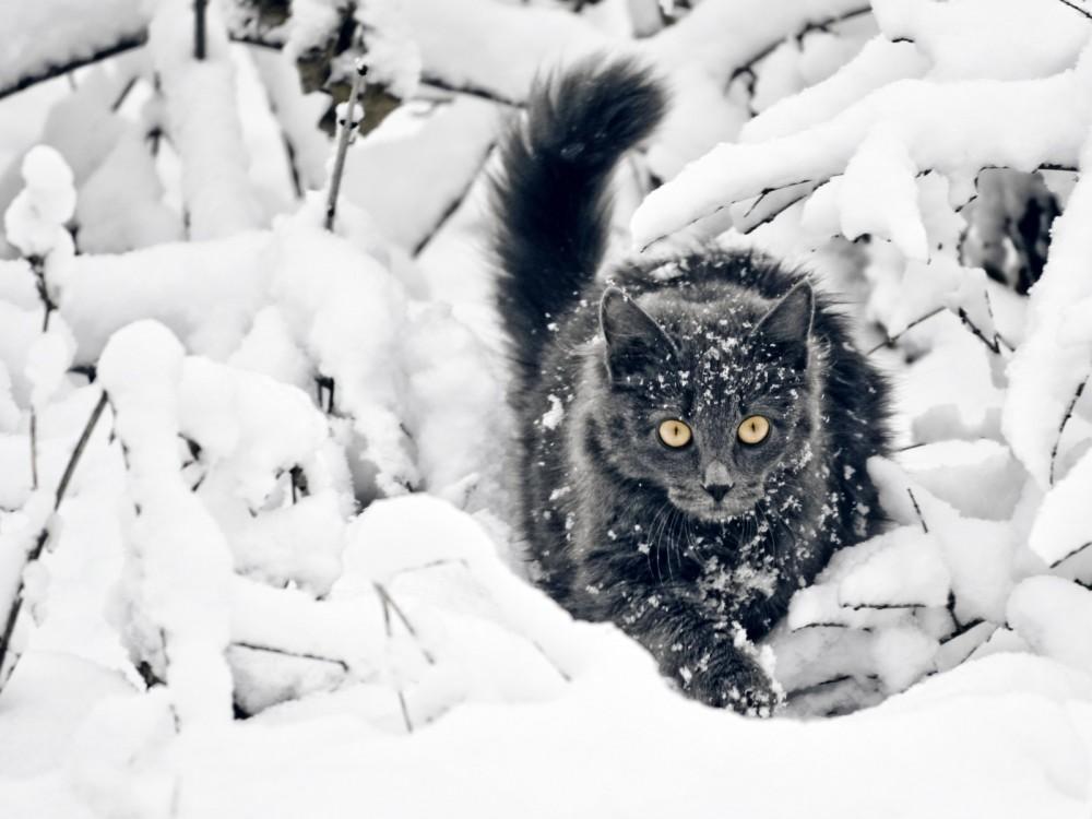 猫だって雪が好き!?真っ白になってはしゃぐ猫たちがかわいい!