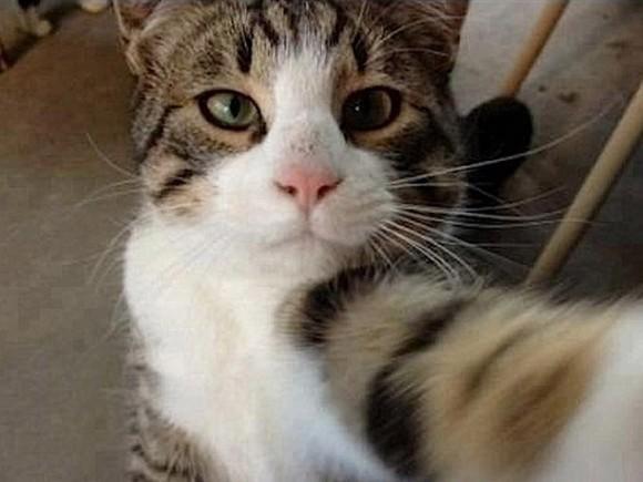 【猫好き必見!】にゃんこの自撮り写真が可愛くて面白すぎる件