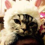 準備はできた? amazonで買える2016年の猫カレンダー9選