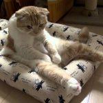 思わずクスっと笑ってしまう「猫のおやじ座り」