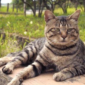 ご存知ですか? 猫に多い病気「下部尿路疾患(F.L.U.T.D)」