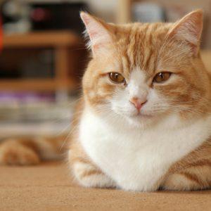 見ていてほっこり。猫のかわいい香箱座り!