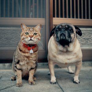 猫の奇跡の瞬間をとらえる!動物カメラマン「岩合光昭さん」をご存知ですか?