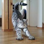 【伸び猫特集】のびー!ぐーん!どこまでも伸びる♪