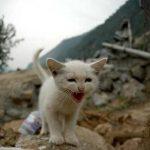 【避難編】地震、災害……その時に、最愛の猫のためにできること