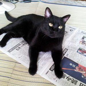 飼い主さん、ちょっと僕に注目ニャ!~猫が人の邪魔をする理由~