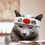 【受験生たちへ】応援してくれる猫を見てやる気をアップ!勉強したくなる猫画像まとめ