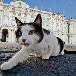 60匹以上猫が住むエルミタージュ美術館は働く猫の楽園だった♪