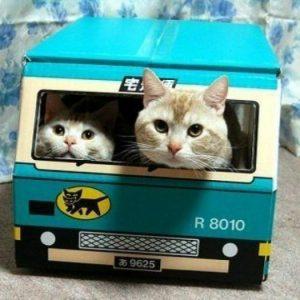 猫の宅急便?クロネコヤマトのダンボールが大好きな猫ちゃんたち♪