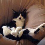 人をダメにするソファは猫をもダメにする。