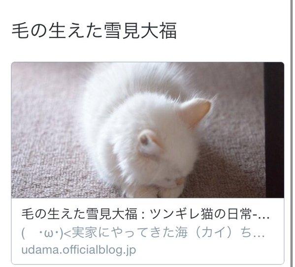 お味はいかが★「大福猫」から「猫団子」まで!和菓子な猫達がカワイイ♪