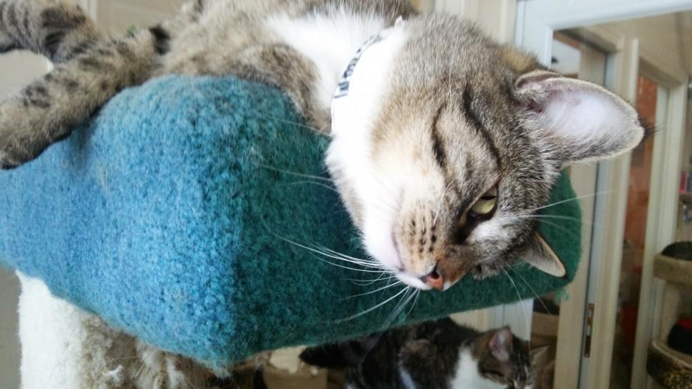手作りネコめしのメリットデメリット:これから猫のご飯を作るために知っておきたいこと。