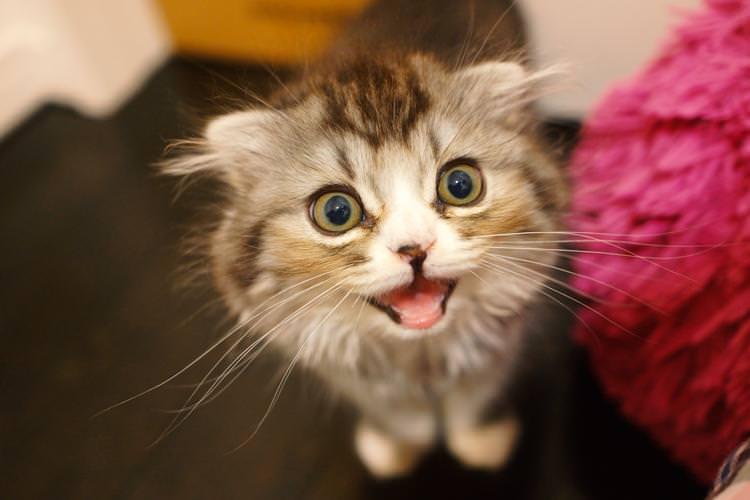 「なぜか猫に嫌われてしまう人」には共通点があった!
