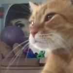 笑撃!?猫のハプニング映像集